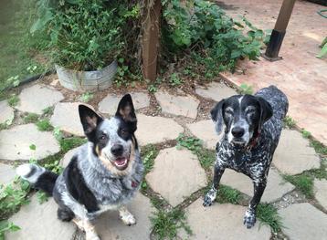 Ann Arbor dog walk