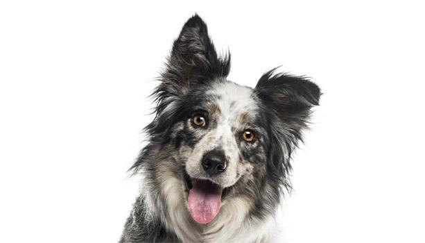 Ann Arbor puppy