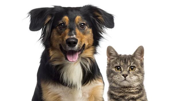 dog and cat sitter Ann Arbor